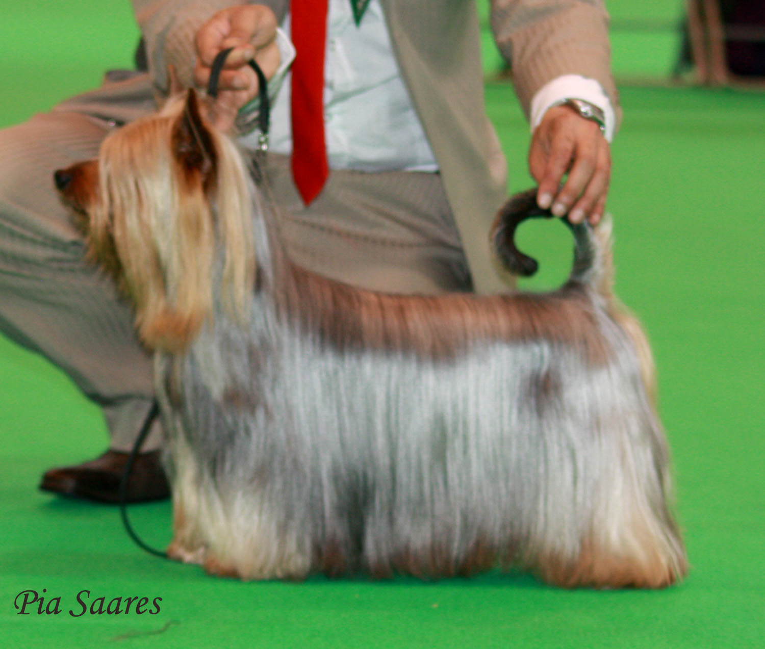 http://www.md10.eu/Blogs/Best%20Dog%20Shampoo%20for%20Australian%20Silky%20Blue_crufts.jpg