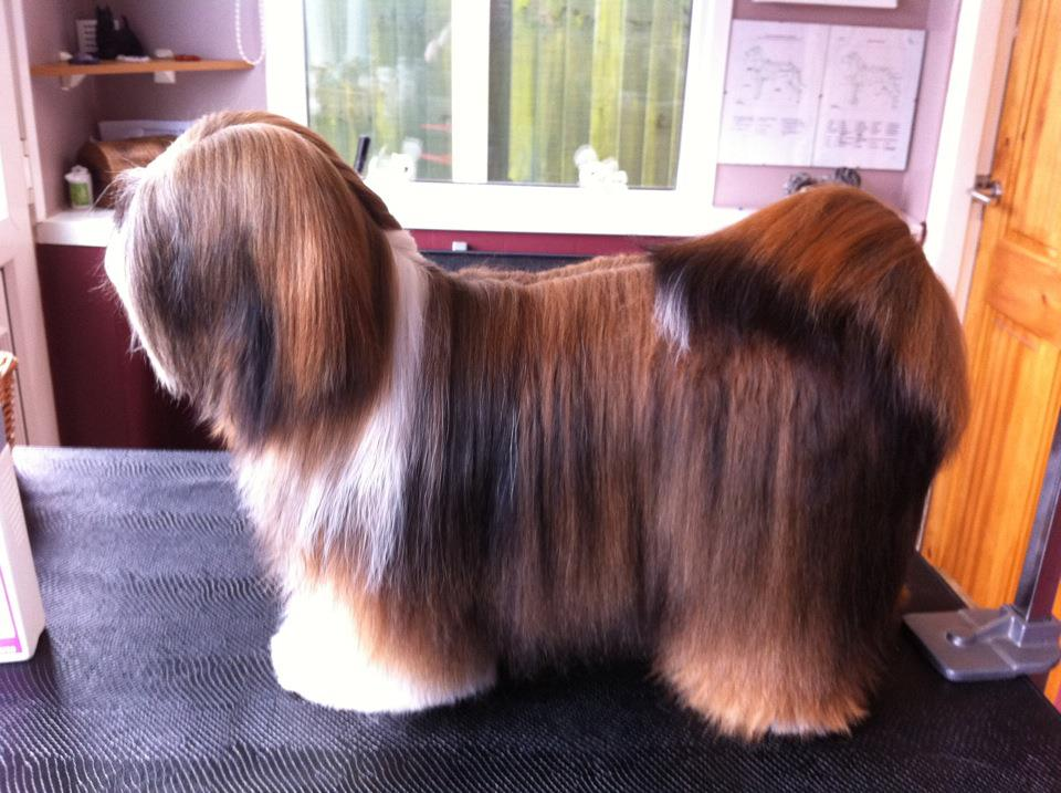 http://www.md10.eu/Blogs/Best%20Shampoo%20for%20Lhasa%20Apso%20Yvonne.jpg