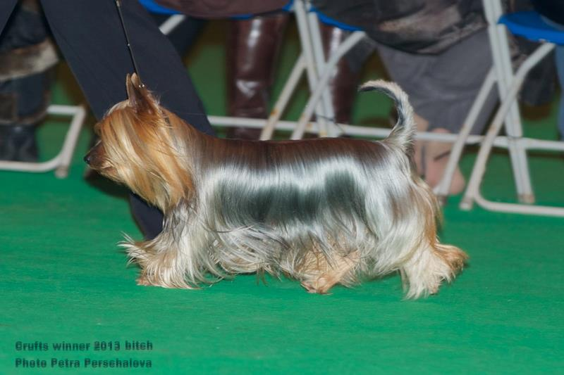 Best Silky Conditioner For Lhasa Apso Dog