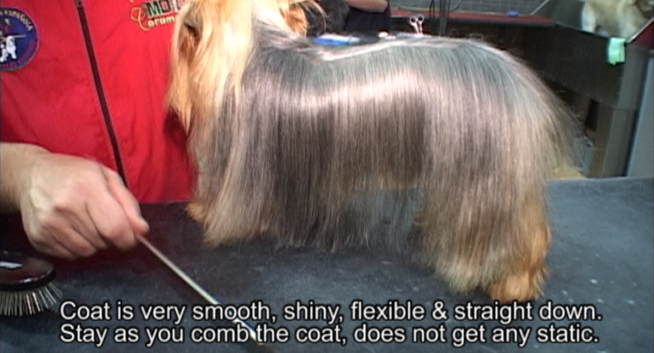 Professional Dog Grooming Shampoo And Conditioner Dog Shampoo Dog